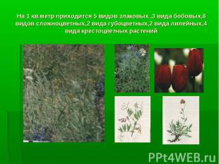 На 1 кв.метр приходится 5 видов злаковых ,3 вида бобовых,6 видов сложноцветных,2