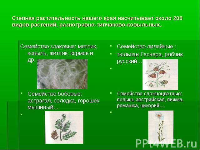 Степная растительность нашего края насчитывает около 200 видов растений, разнотравно-типчаково-ковыльных. Семейство злаковые: мятлик, ковыль, житняк, кермек и др. Семейство бобовые: астрагал, солодка, горошек мышиный… Семейство лилейные : тюльпан Ге…