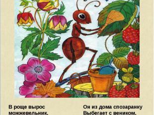 В роще вырос можжевельник, И в тени его ветвей Появился муравейник, Поселился му