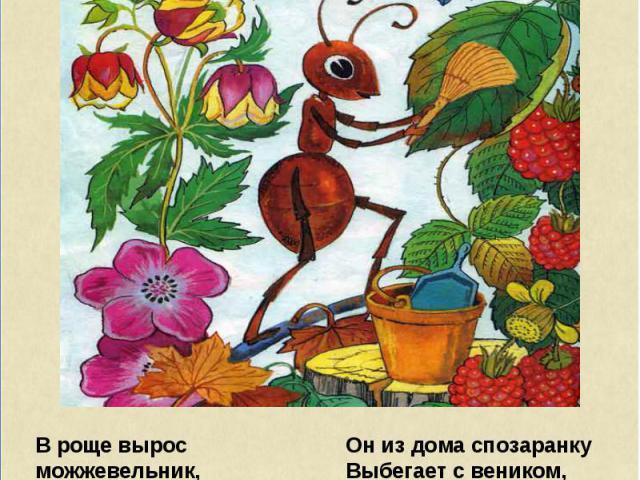 В роще вырос можжевельник, И в тени его ветвей Появился муравейник, Поселился муравей. Он из дома спозаранку Выбегает с веником, Подметает всю полянку Перед муравейником. Замечает все соринки, Начищает все травинки, Каждый кустик, каждый пень, Кажды…