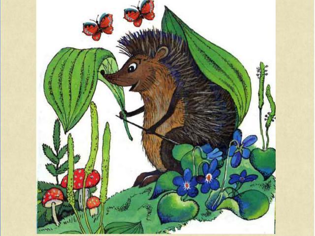 На спине у ёжика Листья подорожника. Он больному обещает: «От компресса полегчает!». И другое средство тоже Предлагает муравью: «Вдруг укол тебе поможет, Я иголку дам свою».
