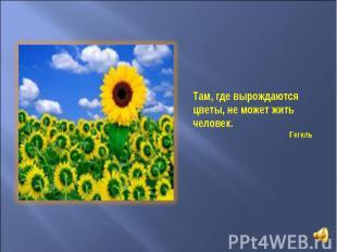 Там, где вырождаются цветы, не может жить человек. Гегель