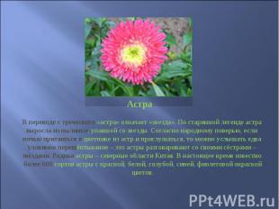 Астра В переводе с греческого «астра» означает «звезда». По старинной легенде ас
