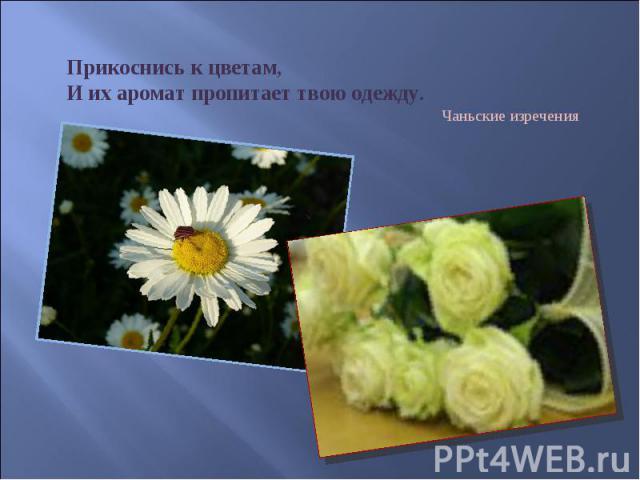 Прикоснись к цветам, И их аромат пропитает твою одежду. Чаньские изречения