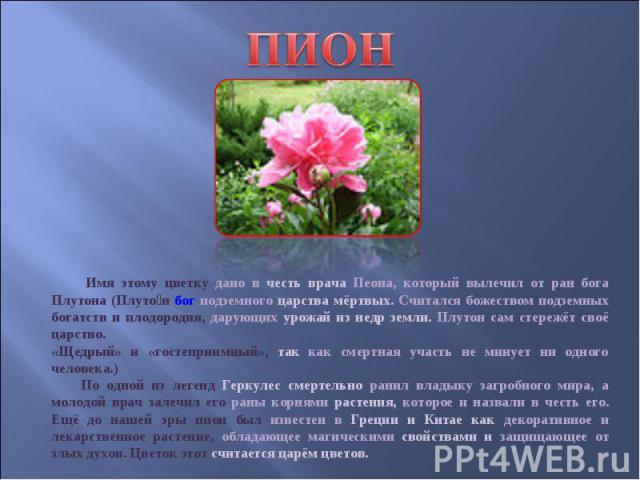 ПИОН Имя этому цветку дано в честь врача Пеона, который вылечил от ран бога Плутона (Плуто н бог подземного царства мёртвых. Считался божеством подземных богатств и плодородия, дарующих урожай из недр земли. Плутон сам стережёт своё царство. «Щедрый…