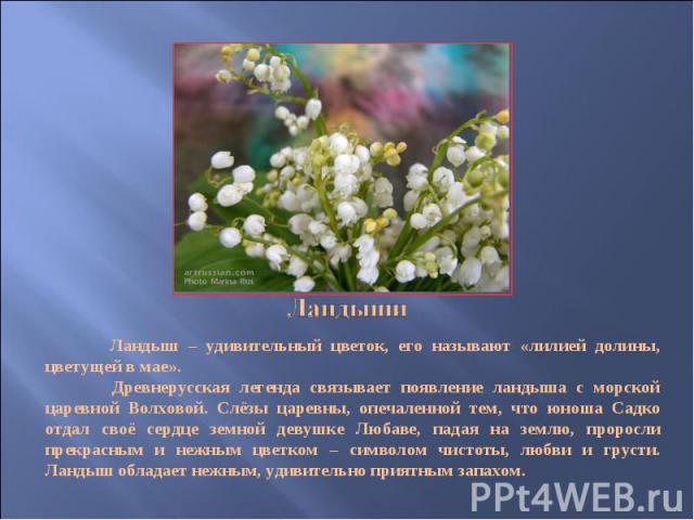 Ландыши Ландыш – удивительный цветок, его называют «лилией долины, цветущей в мае». Древнерусская легенда связывает появление ландыша с морской царевной Волховой. Слёзы царевны, опечаленной тем, что юноша Садко отдал своё сердце земной девушке Любав…