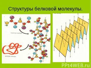 Структуры белковой молекулы.
