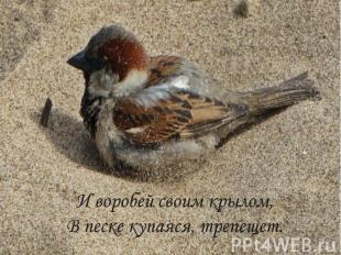И воробей своим крылом, В песке купаяся, трепещет.