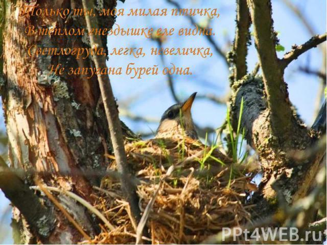 Только ты, моя милая птичка, В теплом гнездышке еле видна. Светлогруда, легка, невеличка, Не запугана бурей одна.