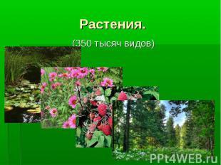 Растения. (350 тысяч видов)