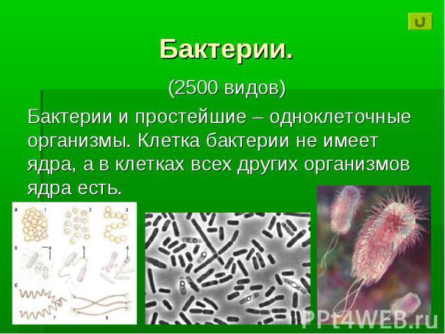 Бактерии. (2500 видов) Бактерии и простейшие – одноклеточные организмы. Клетка бактерии не имеет ядра, а в клетках всех других организмов ядра есть.