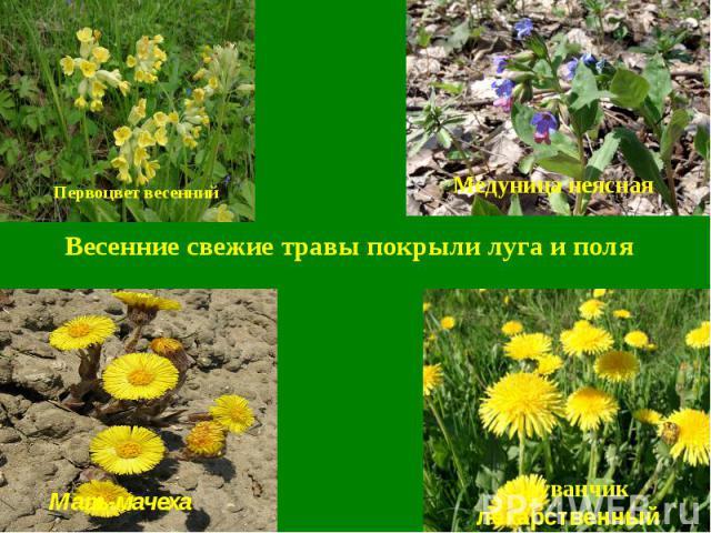 Весенние свежие травы покрыли луга и поля
