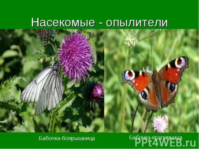Насекомые - опылители Бабочка-боярышница Бабочка-крапивница