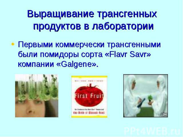Выращивание трансгенных продуктов в лаборатории Первыми коммерчески трансгенными были помидоры сорта «Flavr Savr» компании «Galgene».