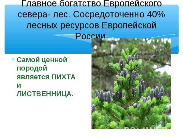 Главное богатство Европейского севера- лес. Сосредоточенно 40% лесных ресурсов Европейской России. Самой ценной породой является ПИХТА и ЛИСТВЕННИЦА.