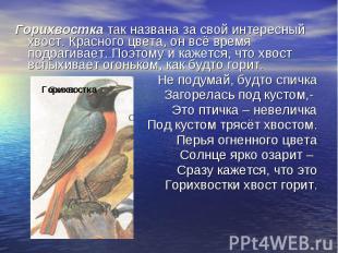 Горихвостка так названа за свой интересный хвост. Красного цвета, он всё время п