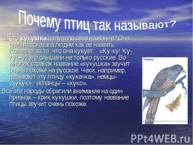Почему птиц так называют? За что кукушка получила своё название? Она сама подсказала людям как её назвать. Конечно, за то, что она кукует: «Ку-ку! Ку-ку!» И это слышали не только русские. Во многих странах название «кукушка» звучит очень похоже на р…