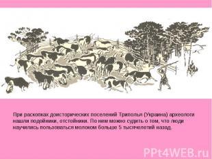 При раскопках доисторических поселений Триполья (Украина) археологи нашли подойн