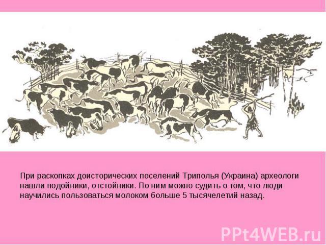 При раскопках доисторических поселений Триполья (Украина) археологи нашли подойники, отстойники. По ним можно судить о том, что люди научились пользоваться молоком больше 5 тысячелетий назад.