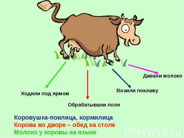 Коровушка-поилица, кормилица Корова во дворе – обед на столе Молоко у коровы на языке