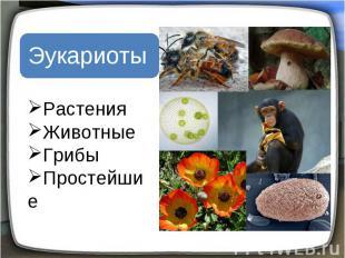 Эукариоты Растения Животные Грибы Простейшие