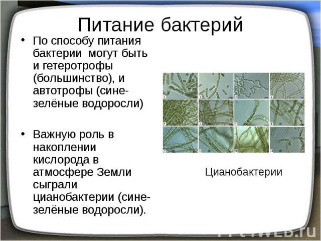 Питание бактерий По способу питания бактерии могут быть и гетеротрофы (большинство), и автотрофы (сине-зелёные водоросли) Важную роль в накоплении кислорода в атмосфере Земли сыграли цианобактерии (сине-зелёные водоросли).