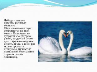 Лебедь – символ красоты и символ верности. Образовавшаяся пара сохраняется на вс