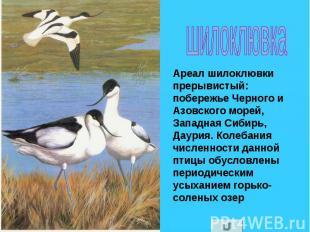шилоклювка Ареал шилоклювки прерывистый: побережье Черного и Азовского морей, За
