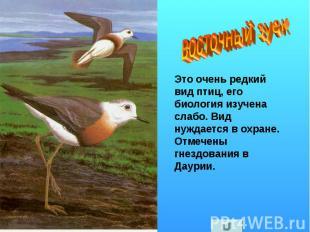 восточный зуек Это очень редкий вид птиц, его биология изучена слабо. Вид нуждае