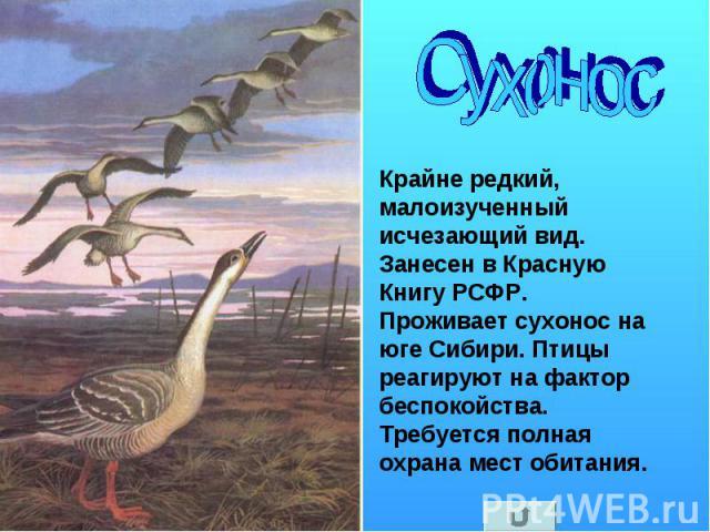 Сухонос Крайне редкий, малоизученный исчезающий вид. Занесен в Красную Книгу РСФР. Проживает сухонос на юге Сибири. Птицы реагируют на фактор беспокойства. Требуется полная охрана мест обитания.