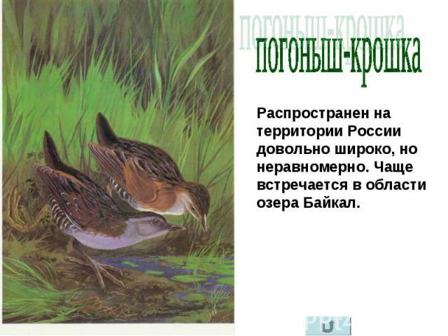 погоныш-крошка Распространен на территории России довольно широко, но неравномерно. Чаще встречается в области озера Байкал.