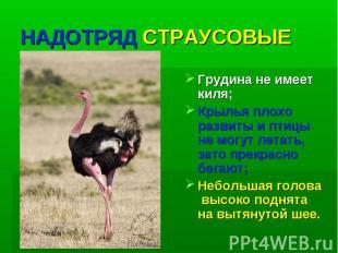НАДОТРЯД СТРАУСОВЫЕ Грудина не имеет киля; Крылья плохо развиты и птицы не могут