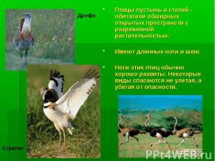 Птицы пустынь и степей - обитатели обширных открытых пространств с разреженной р