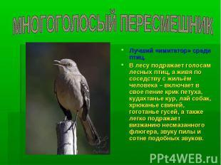 МНОГОГОЛОСЫЙ ПЕРЕСМЕШНИК Лучший «имитатор» среди птиц. В лесу подражает голосам