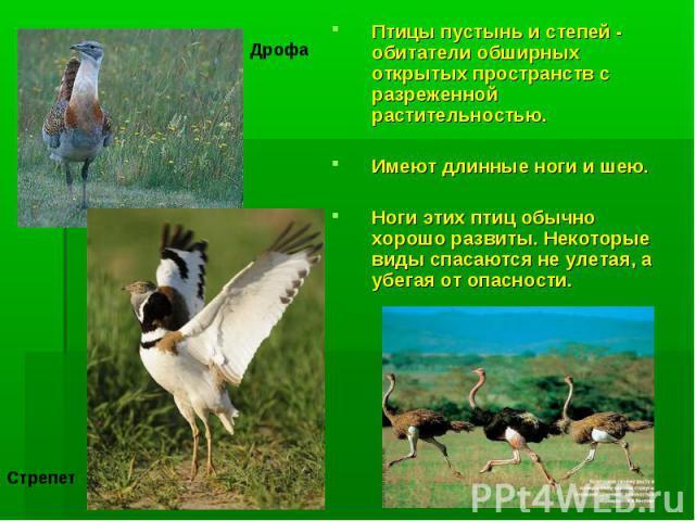 Птицы пустынь и степей - обитатели обширных открытых пространств с разреженной растительностью. Имеют длинные ноги и шею. Ноги этих птиц обычно хорошо развиты. Некоторые виды спасаются не улетая, а убегая от опасности.
