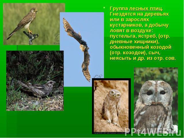 Группа лесных птиц. Гнездятся на деревьях или в зарослях кустарников, а добычу ловят в воздухе: пустельга, ястреб, (отр. дневные хищники), обыкновенный козодой (отр. козодои), сыч, неясыть и др. из отр. сов.