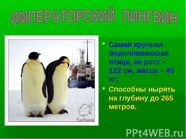 ИМПЕРАТОРСКИЙ ПИНГВИН Самая крупная водоплавающая птица, ее рост – 122 см, масса – 45 кг; Способны нырять на глубину до 265 метров.