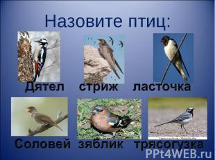 Назовите птиц: Дятел стриж ласточка Соловей зяблик трясогузка