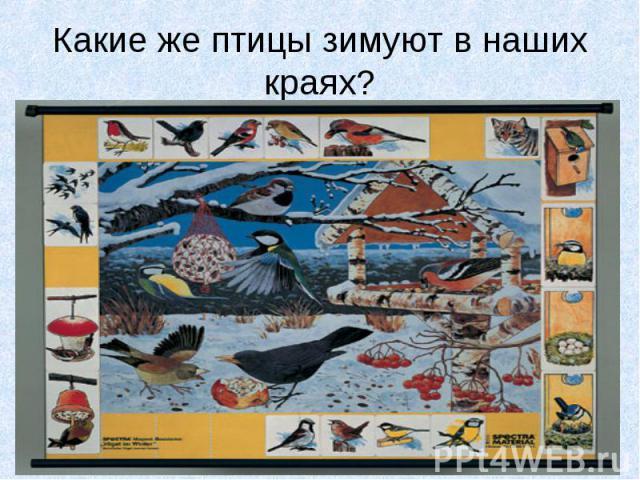 Какие же птицы зимуют в наших краях?