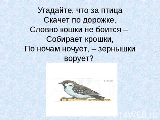 Угадайте, что за птица Скачет по дорожке, Словно кошки не боится – Собирает крошки, По ночам ночует, – зернышки ворует?