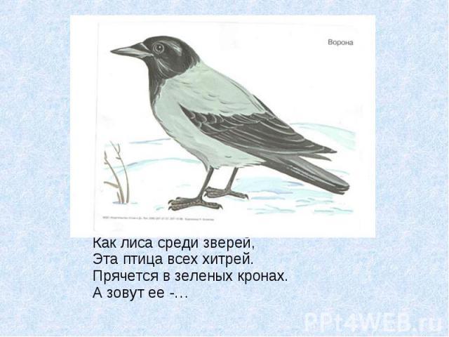 Как лиса среди зверей, Эта птица всех хитрей. Прячется в зеленых кронах. А зовут ее -…