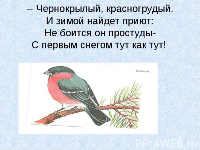 – Чернокрылый, красногрудый. И зимой найдет приют: Не боится он простуды- С первым снегом тут как тут!