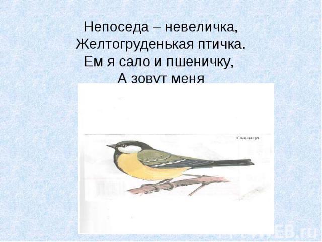 Непоседа – невеличка, Желтогруденькая птичка. Ем я сало и пшеничку, А зовут меня