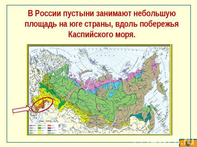 В России пустыни занимают небольшую площадь на юге страны, вдоль побережья Каспийского моря.