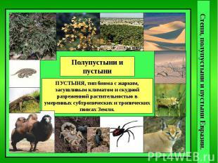 Степи, полупустыни и пустыни Евразии. Полупустыни и пустыни ПУСТЫНЯ, тип биома с