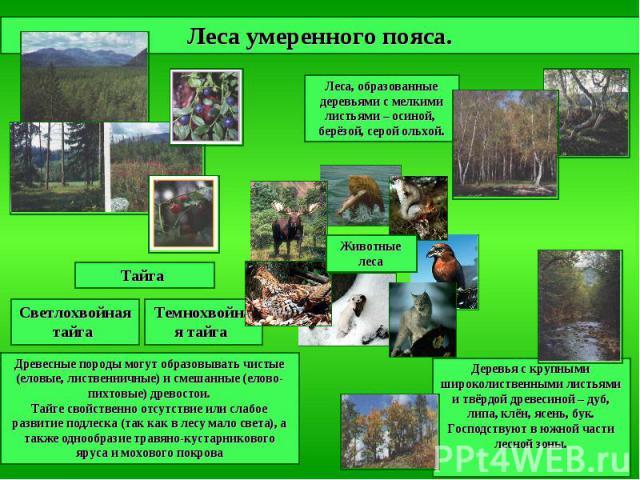 Леса умеренного пояса. Леса, образованные деревьями с мелкими листьями – осиной, берёзой, серой ольхой. Деревья с крупными широколиственными листьями и твёрдой древесиной – дуб, липа, клён, ясень, бук. Господствуют в южной части лесной зоны. Древесн…