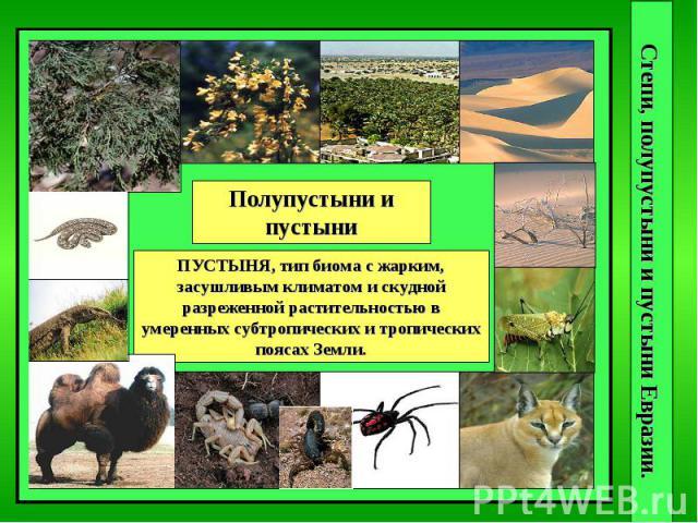 Степи, полупустыни и пустыни Евразии. Полупустыни и пустыни ПУСТЫНЯ, тип биома с жарким, засушливым климатом и скудной разреженной растительностью в умеренных субтропических и тропических поясах Земли.