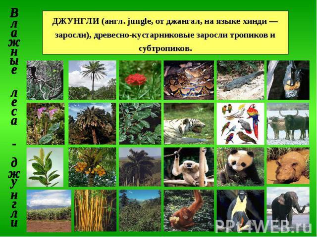 ДЖУНГЛИ (англ. jungle, от джангал, на языке хинди — заросли), древесно-кустарниковые заросли тропиков и субтропиков. Влажные леса - джунгли