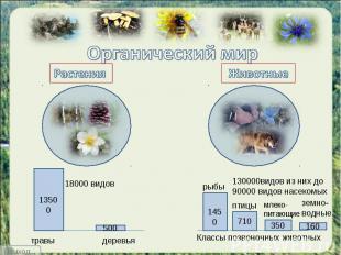 Органический мир