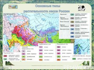 Основные типы растительности лесов России